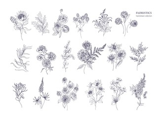 Set of beautiful floristic flowers, flowering plants and wild herbs hand drawn with black contour lines on white background. Bundle of elegant botanical decorations. Hand drawn vector illustration.