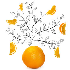 Fruit composition with fresh orange and cartoon cute doodle drawing branches with leaves on white background. Creative minimalistic food concept.