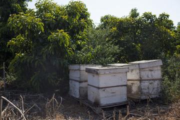 Farm Bee hive