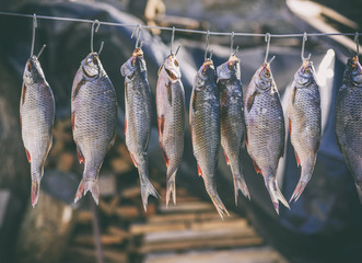 salted river fish hanging on metal hooks