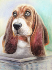 Basset hound dog sitting in a basket in the summer and looking forward