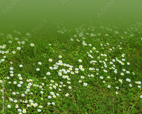 Spring meadow with young green grass and small white daisies spring meadow with young green grass and small white daisies natural background with meadow flowers mightylinksfo