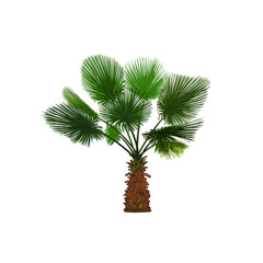 Vector illustration of color fun palm. Tropical palm tree