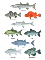 Cartoon illustrations of freshwater and ocean fishes