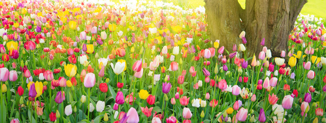 Colorful spring flower meadow and sunshine.