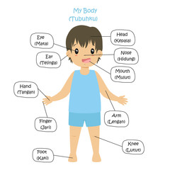 My Body Parts, boy cartoon vector template for kids. My body parts bilingual, English and Indonesian language.