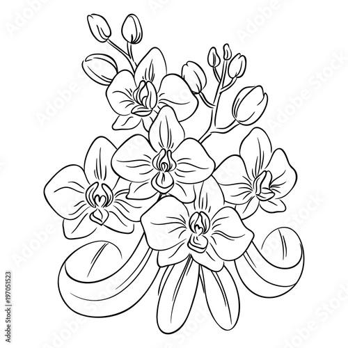 Vector Contour Orchid Flower Bouquet Symbol Coloring Page