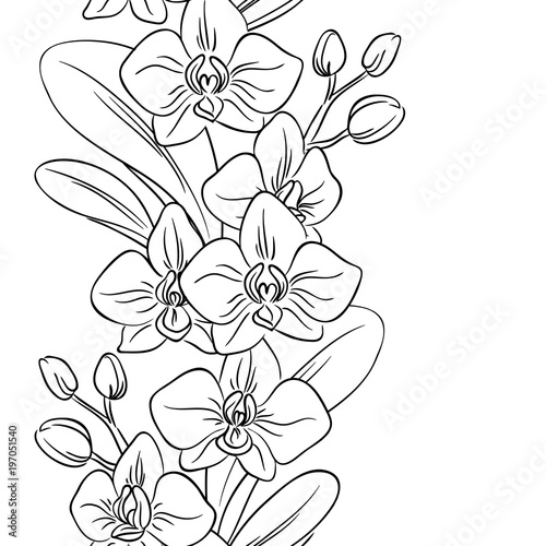 Vector Contour Orchid Flower Bouquet Symbol Coloring Page Vertical Seamless Pattern