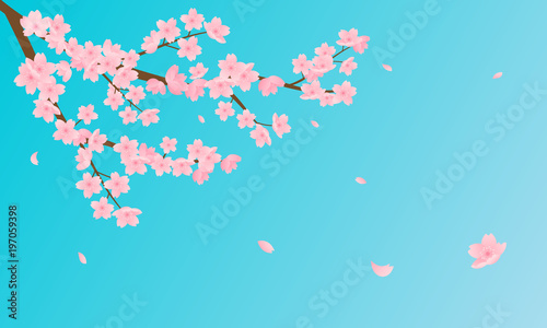 Wall mural Cherry Blossom vector illustration. Pink Sakura branch with petals falling against bright blue sky background.