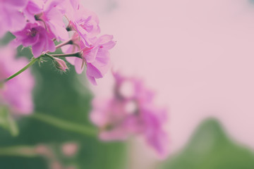 Beautiful pastel floral border beautiful blurred background shallow depth of field