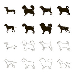 Pit bull, german shepherd, chow chow, schnauzer. Dog breeds set collection icons in black,outline style vector symbol stock illustration web.