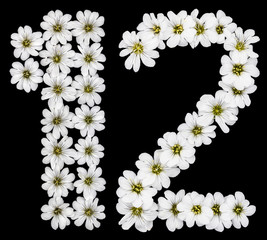 Arabic numeral 12, twelve, one, two, from white flowers of Cerastium tomentosum, isolated on black background