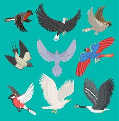 Fllying birds vector illustration cartoon cute fauna feather flight animal silhouette spring freedom natural concept. Wildlife drawing isolated fly birds with wings