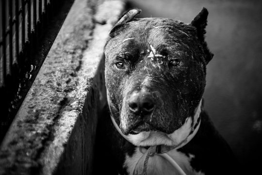 dog abandoned between bars, black and white