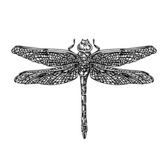 Dragonfly. Engraving style. Vector Illustration.