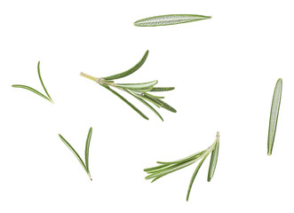Rosemary twigs isolated on white background. Top view.