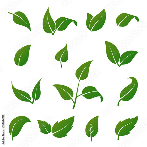 green tree and plant leaves vector icons isolated on white rh fotolia com