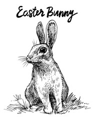 Bunny. Vector hand drawn graphic illustration.