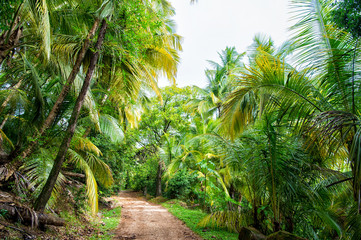 Jungle, rainforest, forest. Path in jungle of devils island, french guinea.Palm trees with green leaves. Nature, environment, ecology. Wanderlust, vacation, travel.