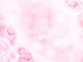 Pale pink roses in the corners of the blurred background