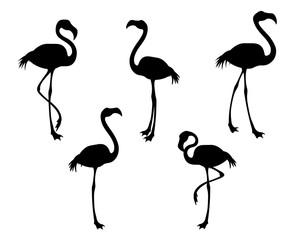 Flamingo bird black silhouettes