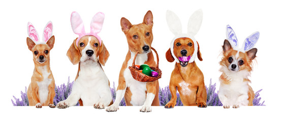 Dogs of different breeds holding the blank board wearing Easter outfit
