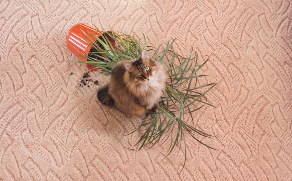 Fallen flower on carpet and fluffy cat, cleaning concept