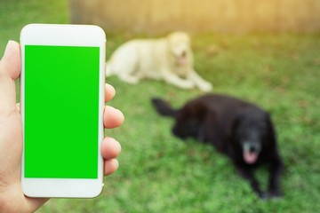 hand holding phone Leave space display green screen background Dog pet in the lawn.