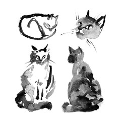 Wet to wet watercolor ink illustration of the fluffy siberian cat on white background. Collection of cute cat in different pose