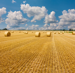 Yellow golden straw bales of hay in the stubble field, summer landscape under a blue sky with clouds