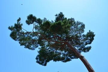 木 flower 松