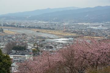 桜 花 flower