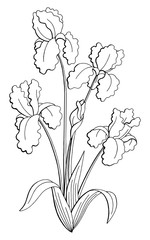 Iris flower graphic black white isolated bouquet sketch illustration vector