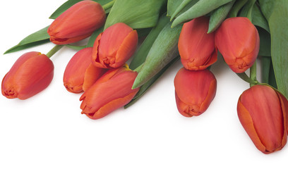 Bouquet of red tulips, copy space. Spring fresh flowers, mockup for mothers day, valentine or wedding greeting card