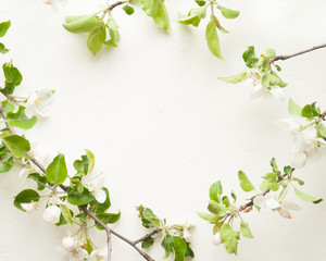 blossom apple tree on WHITE background