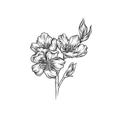 Blooming flower branch, black and white hand drawn floral design element vector Illustration