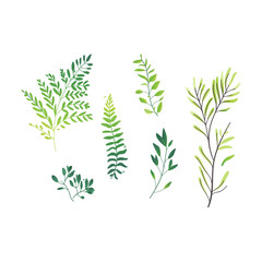 Vector cartoon abstract green plant set icon. Wild meadow field grass garden spring easter, women day romantic holiday, wedding invitation card decoration summer floral Illustration white background