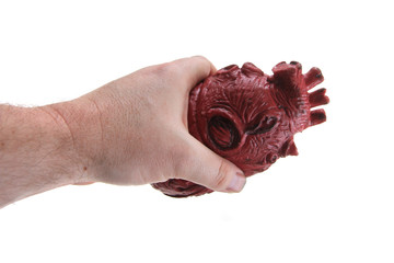 plastic human heart isolated