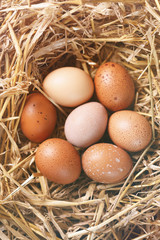 Easter eggs in nest, tinted