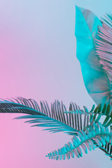 Pastel tropical palm leaves