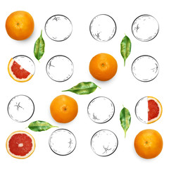 Fruit composition with fresh grapefruit and cartoon cute doodle drawing oranges on white background. Creative minimalistic food concept.