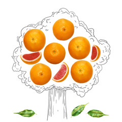 Fruit composition with fresh grapefruit and cartoon cute doodle drawing tree on white background. Creative minimalistic food concept.