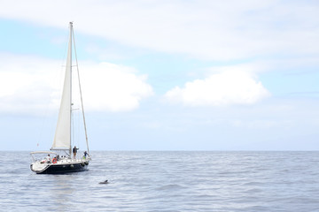 The sailors are watching the dolphin floating at the end of their sailboat. The event takes place near the island of Tenerife in Spain.
