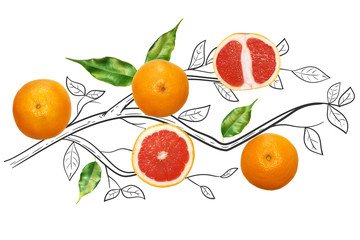 Fruit composition with fresh grapefruit and cartoon cute doodle drawing branches with leaves on white background. Creative minimalistic food concept.