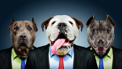 Portrait of three dogs in business suits