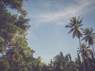 Palm trees at tropical coast with clear blue sky. Vintage toned style. Summer season time background