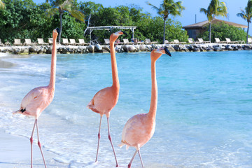 Foto op Canvas Flamingo Flamingo on the beach