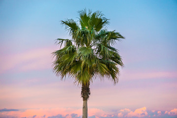 Single Fresh green palm in front of beautiful lilac blue sky