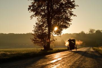 Amish horse and buggy.  Amish country  sunrise, stem