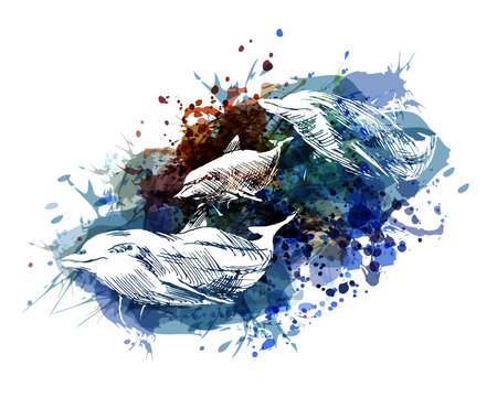 Vector color illustration of dolphins